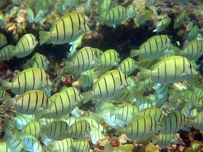 Рыбы Мальдивских островов
