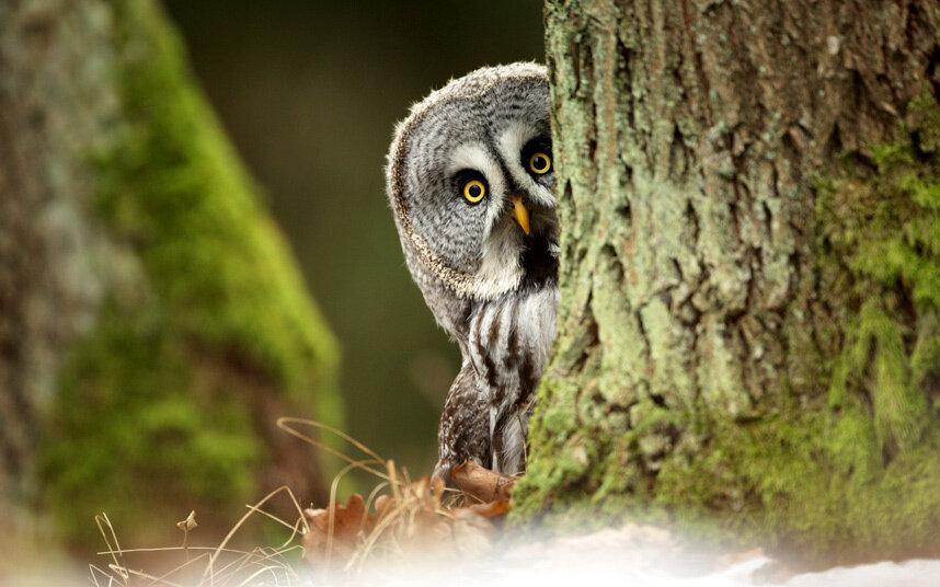 PLAYFUL OWL PLAYS HIDE AND SEEK