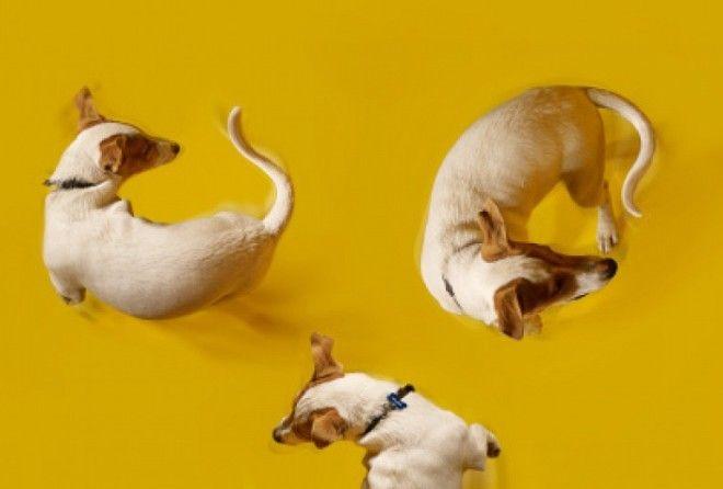 Самый удачный наступающий год будет для людей, рожденных в год  Собаки, Тигра и Лошади
