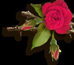 RR_RoseGarden_SideCluster (11).png