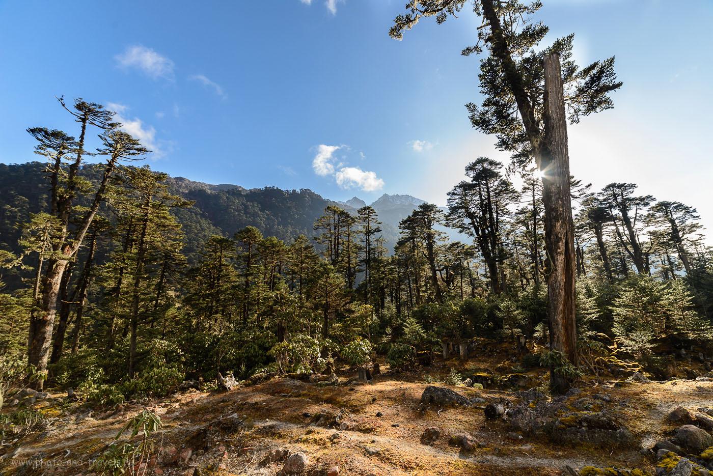 Фотография 20. ДолинаYumthang Valleyв середине ноября. Поездка самостоятельно по северо-востоку Индии. 8.0, 1/100, 160, +0.7, 14.