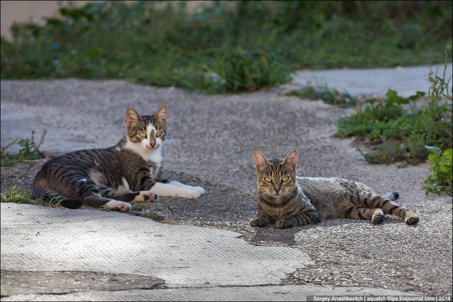 Воскресные котики