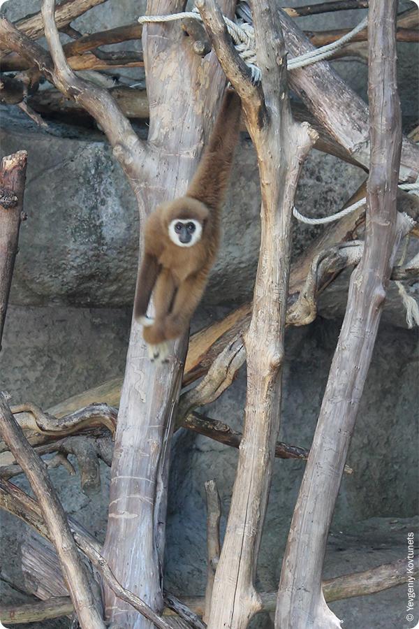 Мистер Очарование в зоопарке Khao-Kheow