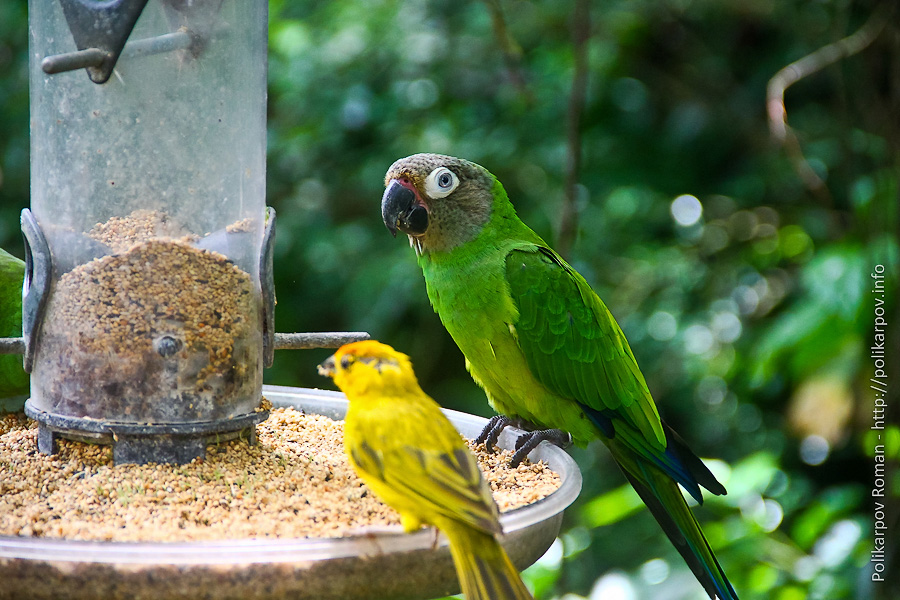 0 c4fcc c863f526 orig Парк птиц Jurong в Сингапуре