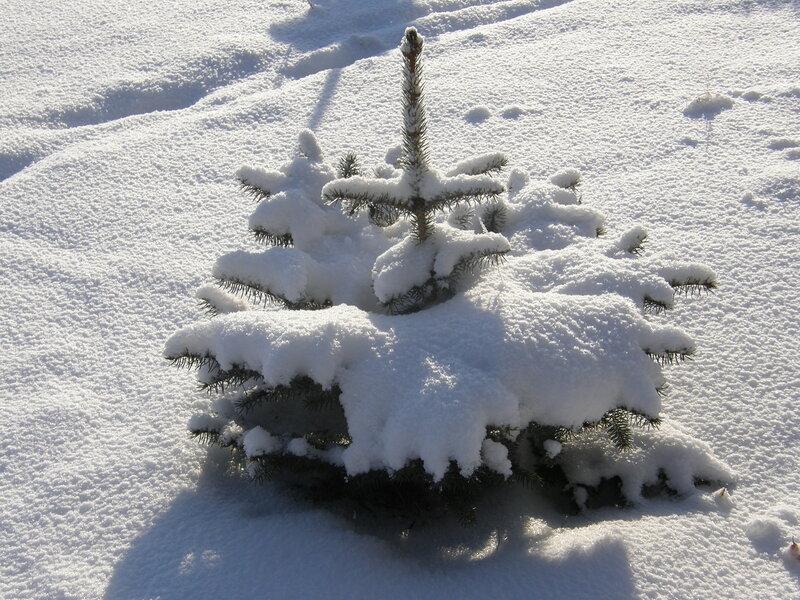 Песня маленькой ёлочке холодно зимой скачать