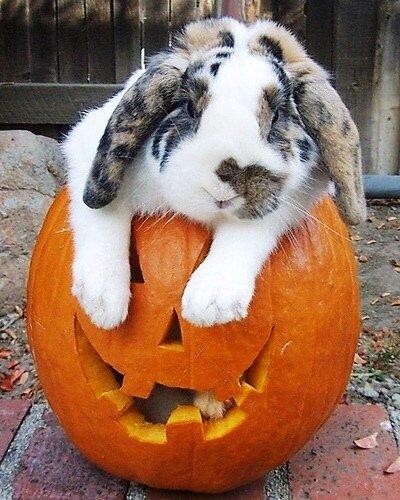 Хеллоуин для всех!