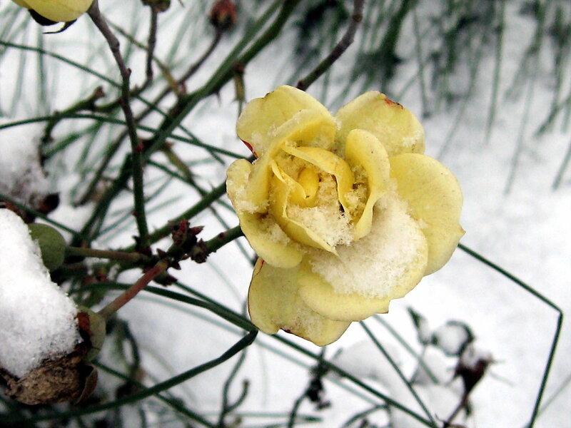 Первый снег, как первая любовь...