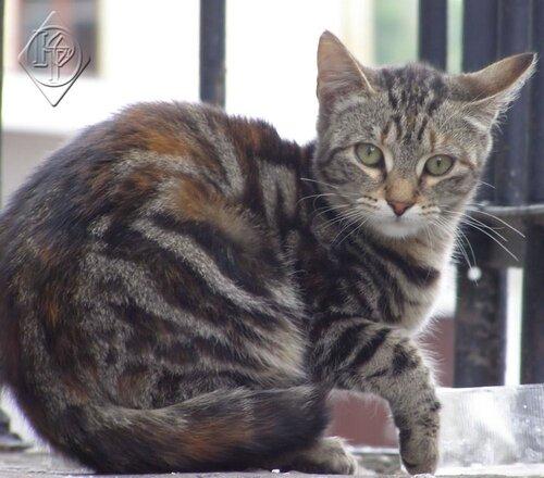 Встревоженный кот