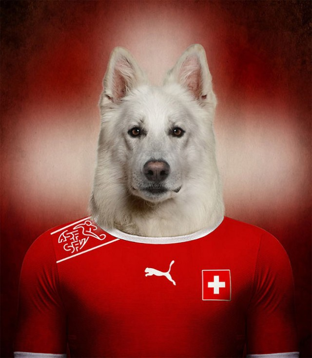 Сборные команды по футболу в виде пород собак
