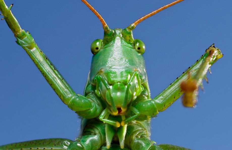 Portrety-nasekomyx-60-foto