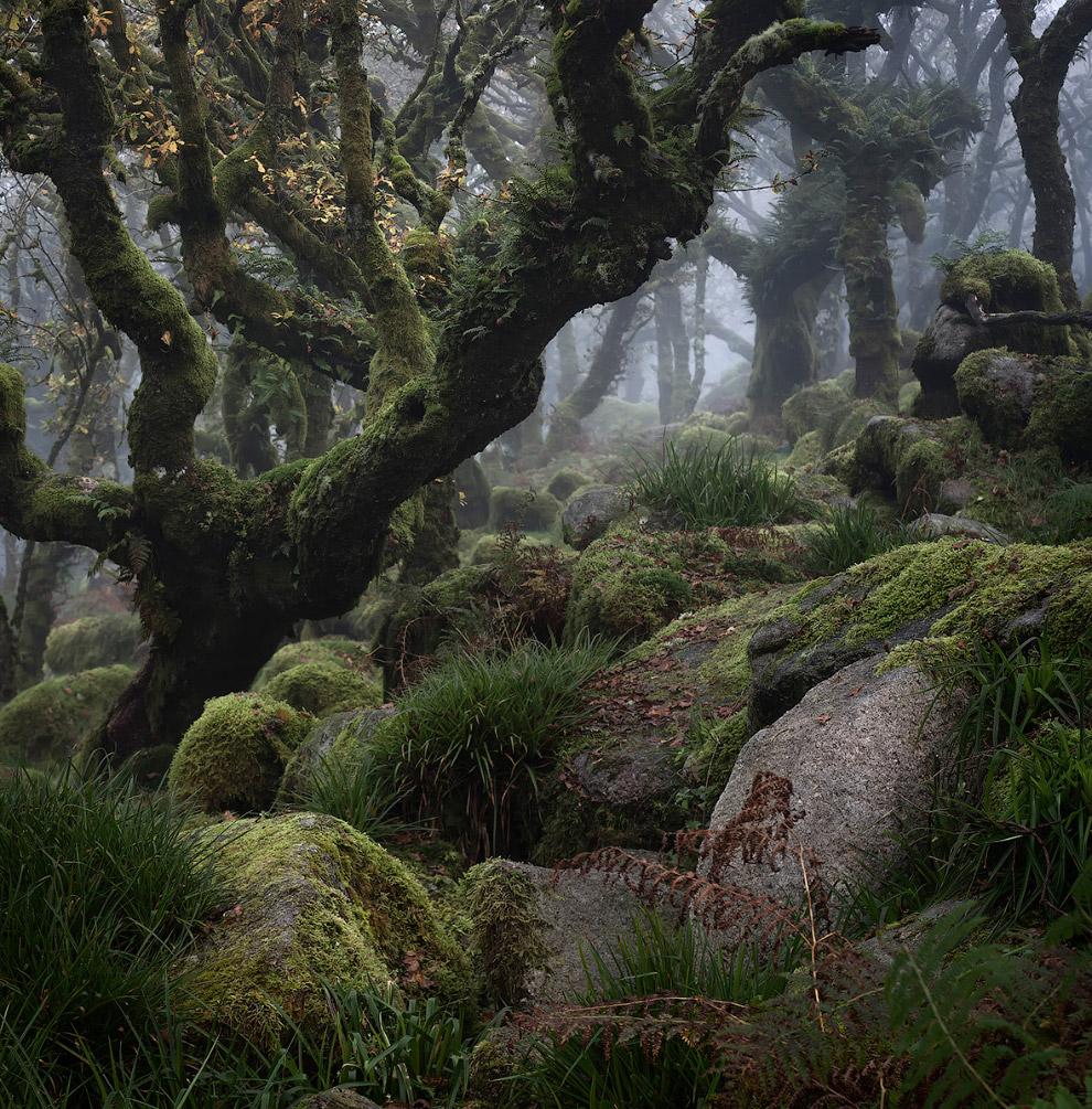 12. Снежное побережье в графстве Дорсет, Англия. (Фото Alex Wright | Landscape Photographer of
