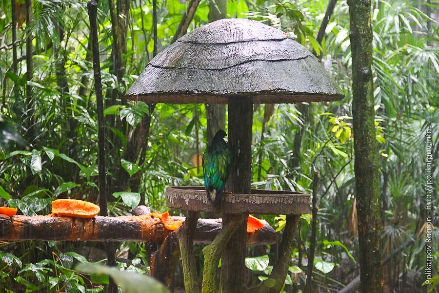 0 c4faa 347b7c15 orig Парк птиц Jurong в Сингапуре