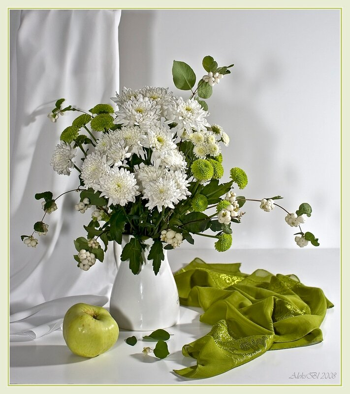 хризантема селебрейт