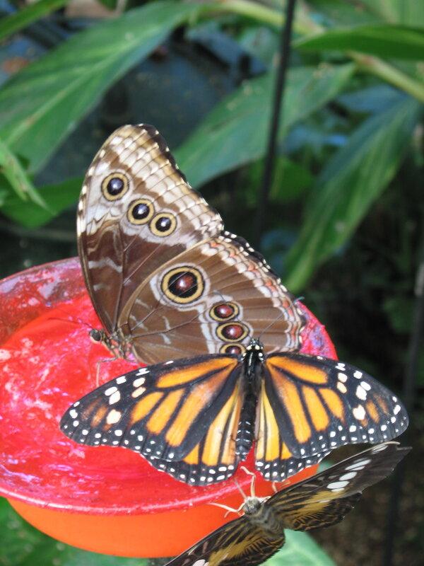 Бабочкарий в Икод де лос Винос, Тенерифе