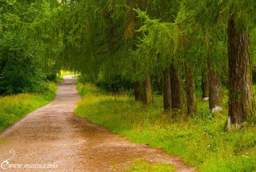 Дорожки Приоратского парка