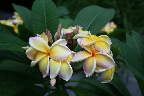 цветы на о.Майнау