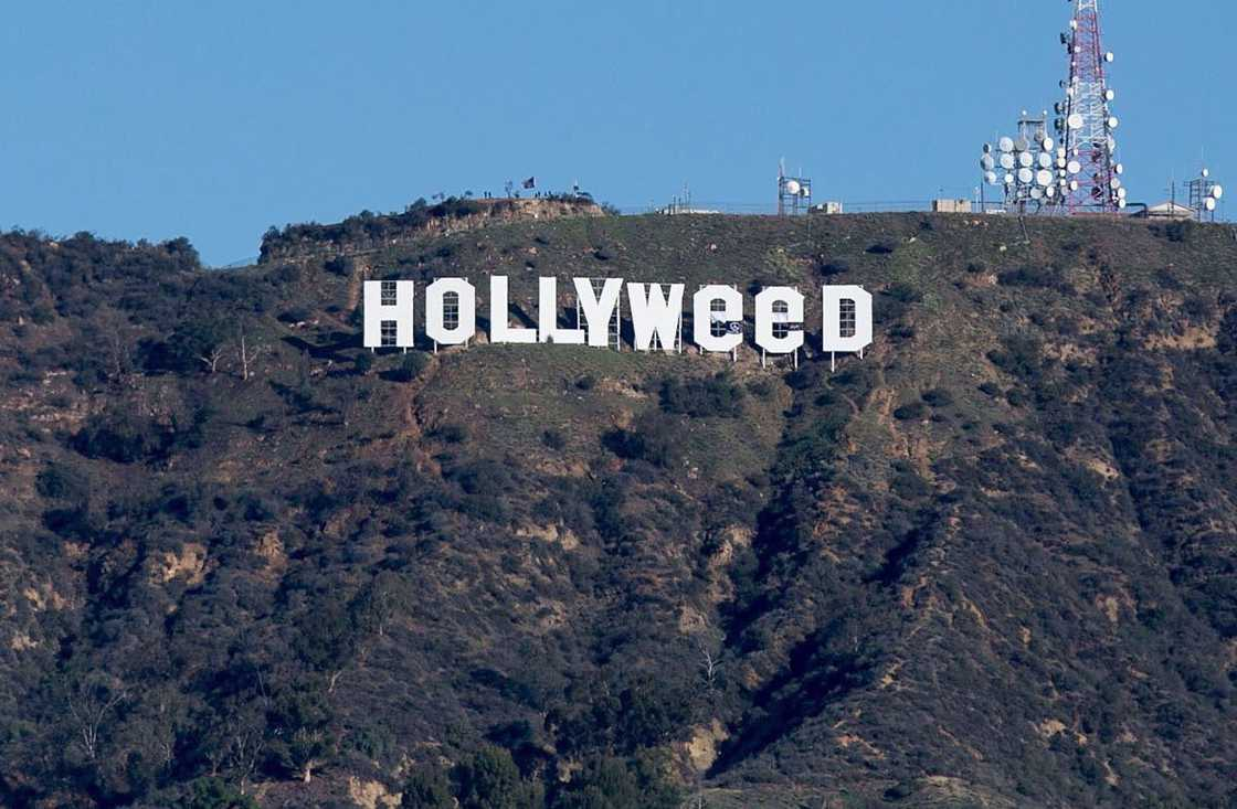 The giant letters of Hollywood transformed into Hollyweed! (7 pics)