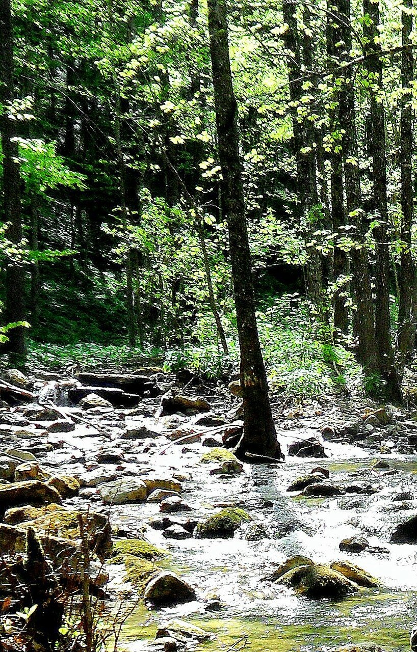 Лес, воды весенние ... SAM_7616 - 1.JPG