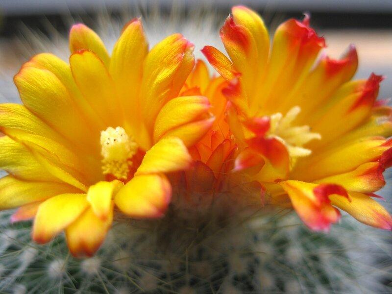 Как сделать так чтобы цветы распустились