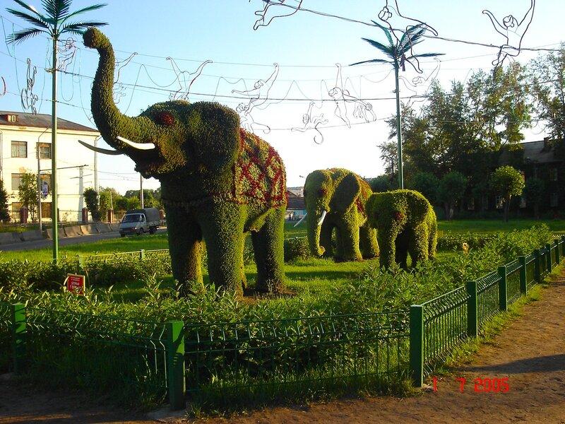 Слоны в Красноярске