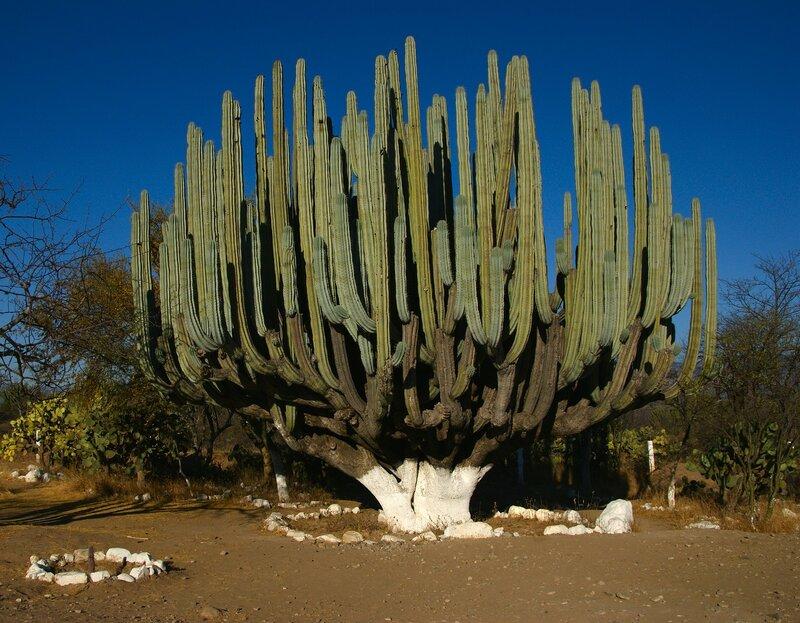 кактусы в природе фото и название