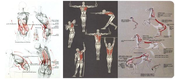 готфрид баммес анатомия для художника скачать на русском