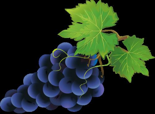 виноград (50).png