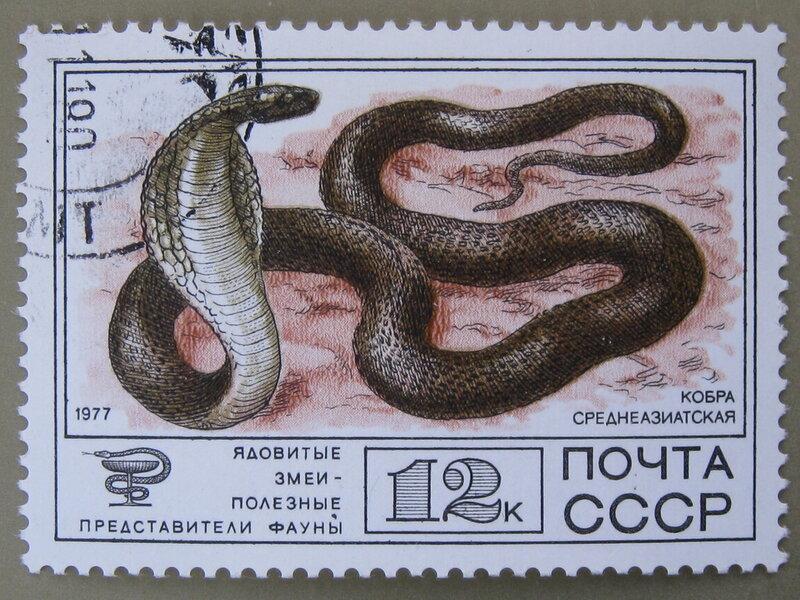 Кобра среднеазиатская (Naja oxiana)