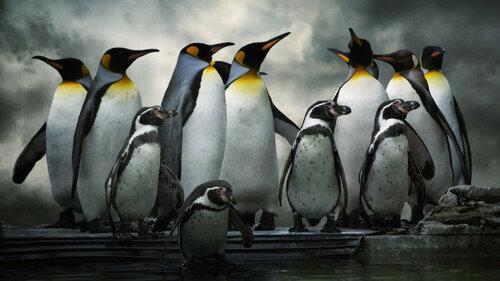penguins-ss-1920-800x450.jpg