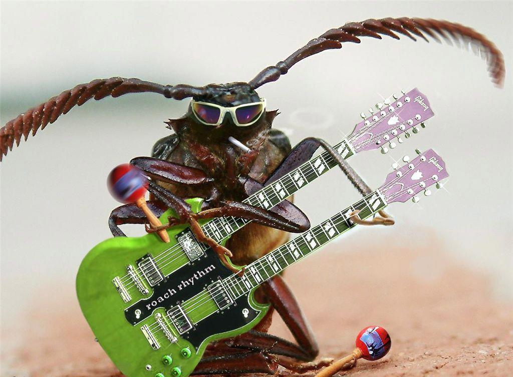 Животные-музыканты