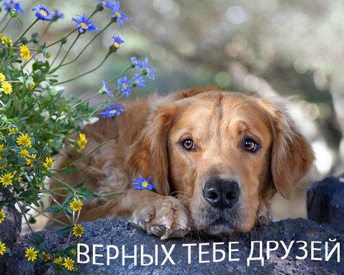 http://img-fotki.yandex.ru/get/3309/chuiko3.1c/0_6fc2_e864a3ef_L.jpg