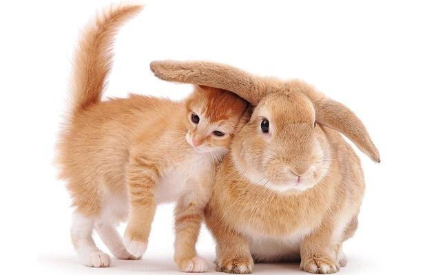 Притча от Котэя. Кошка и кролик