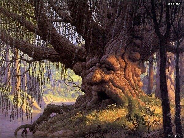 Деревья снять