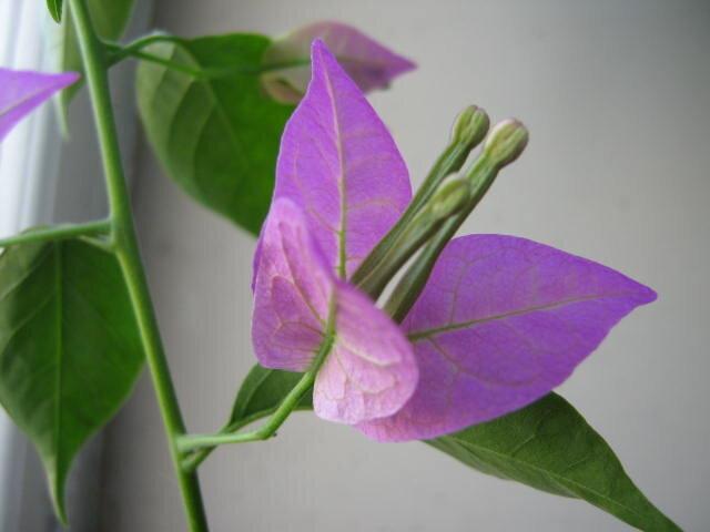 С другими видео-лекциями и мастер-классами флористов можно ознакомиться на Видео.