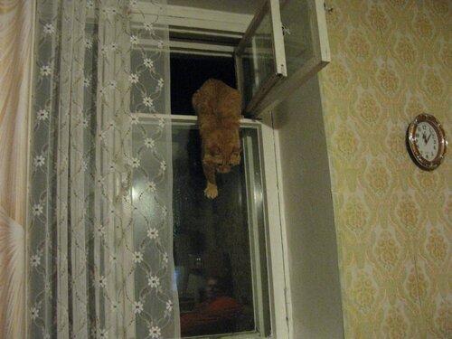 v1005205 — «Мартовский кот-2. Я вернулся домой, я давно дома не был....» на Яндекс.Фотках