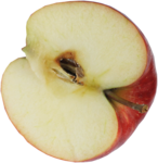 wendyp_autumnflavors_apple.png