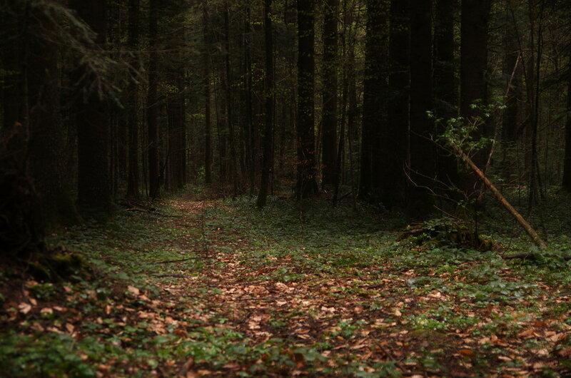 Лес, темный