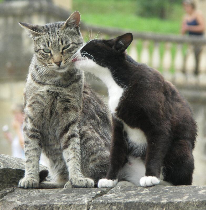 картинки кошек мур шипом