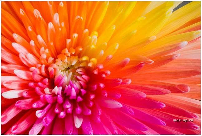 Картинки радужные цветы 4