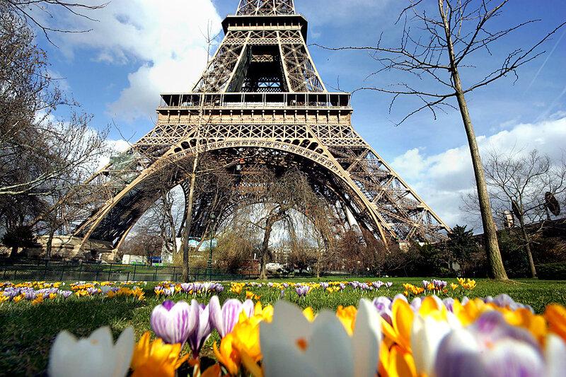 крокусы под Эйфелевой башней