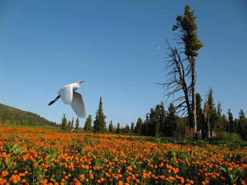 """Палаточный кемпинг  """"Звездный """" находится на территории природного парка  """"Ергаки """" в километре от трассы М54..."""