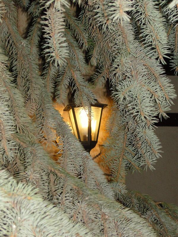 Фонарь в елке
