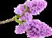 сирень цветы (16).png