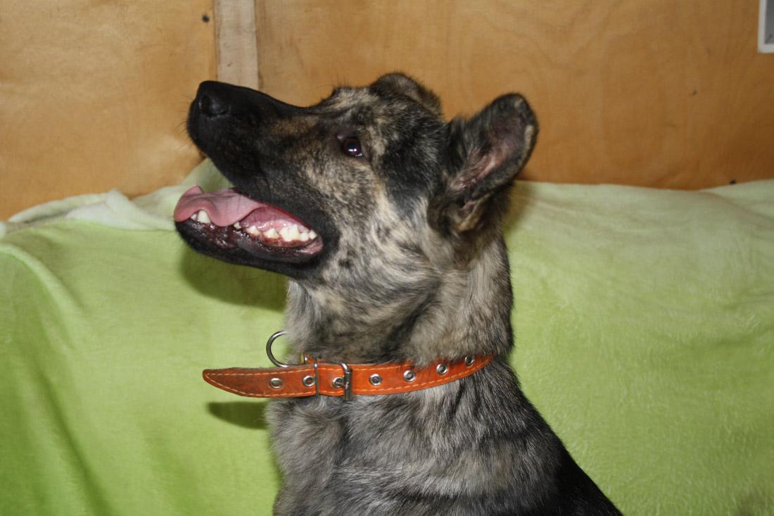 Эльфи собака из приюта догпорт