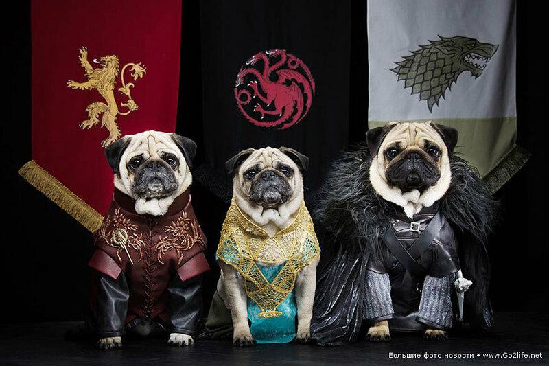 1422661656_2-game-of-thrones-cute-pugs.jpg
