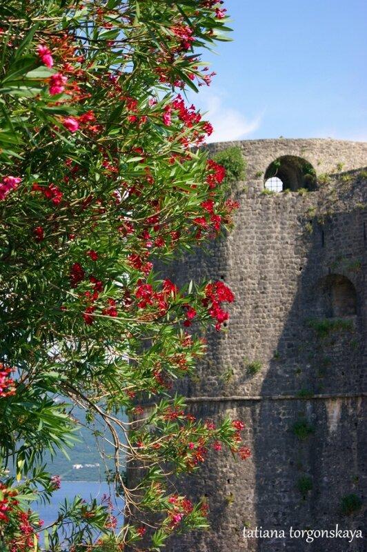 Олеандр возле крепости Канли Кула