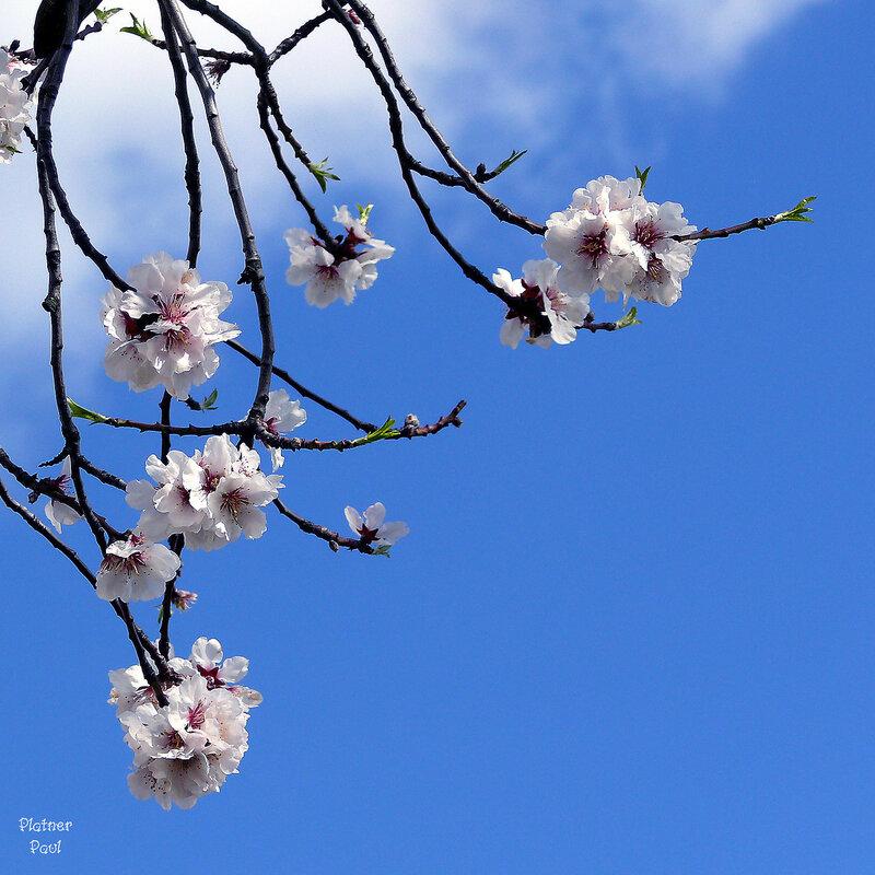 какое небо Голубое! весна