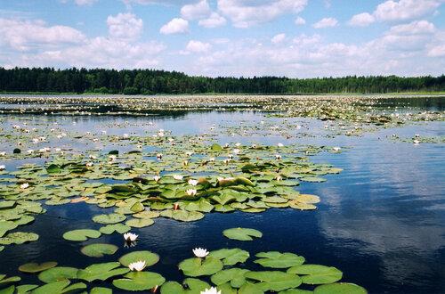 Мещёрское лесное озеро