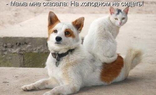 ФОТО ИЗ ИНТЕРНЕТА..