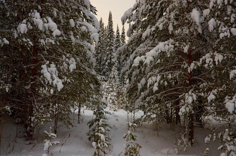 Прогулка в зимний лес